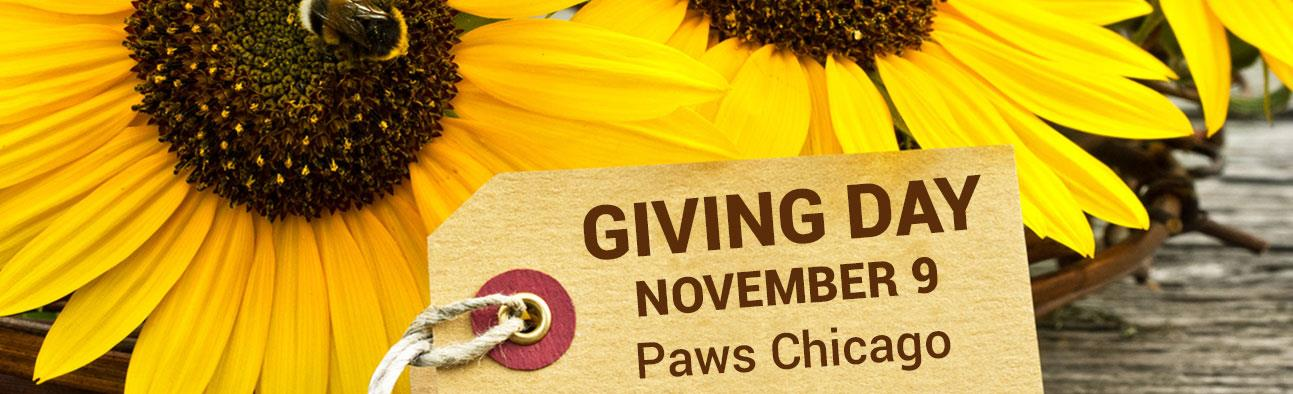 Giving Day - November 9 - Paws Chicago